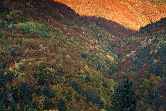 amanece en el bosque de Fanlo