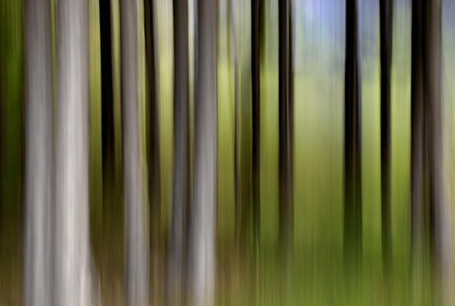 Bosque fantasma (VI)