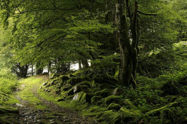 Caminando en verde