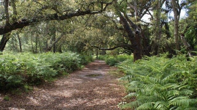 Caminos del Palcio del Acebrón (PN Doñana)