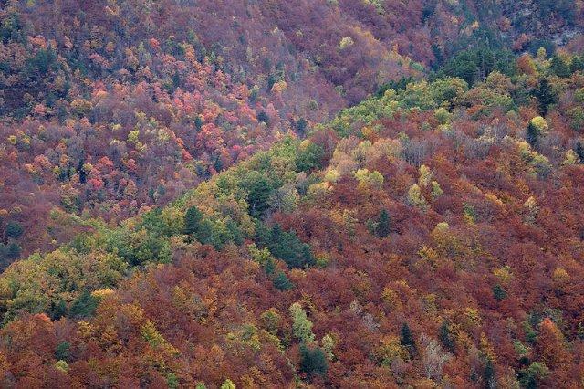 Colores de otoño sin agua
