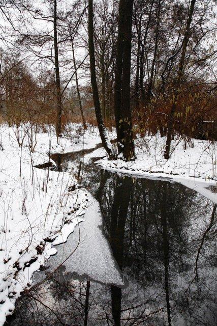 Colores invernales II