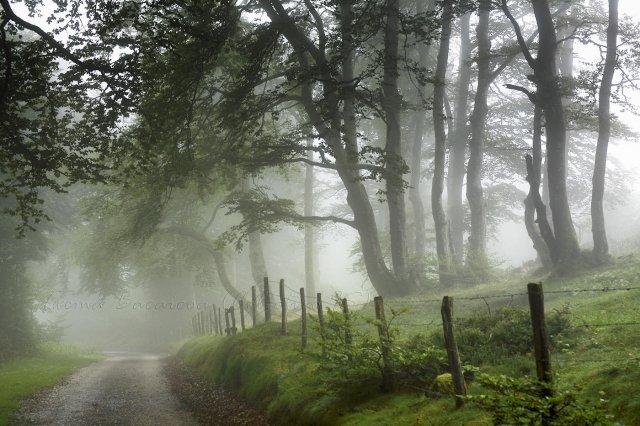 Día de nieblas