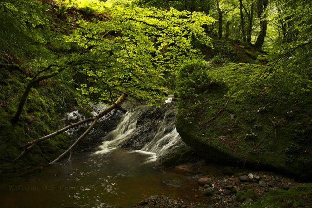Día de verde y agua (Con los pies mojados)