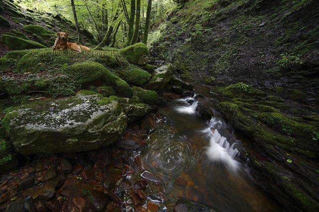 Día de verde y agua II