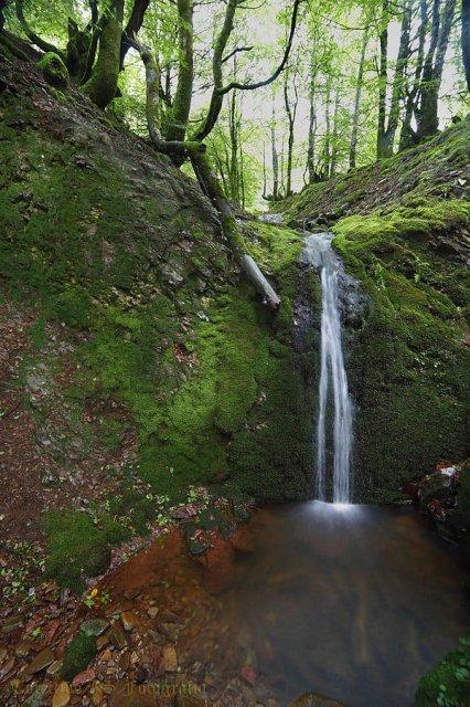 Día de verde y agua III
