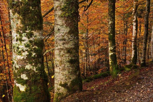 El bosque enrejado