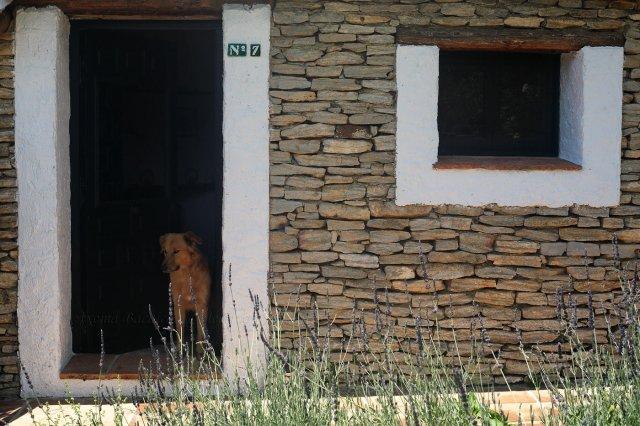 El inquilino de La Algaba, Ronda
