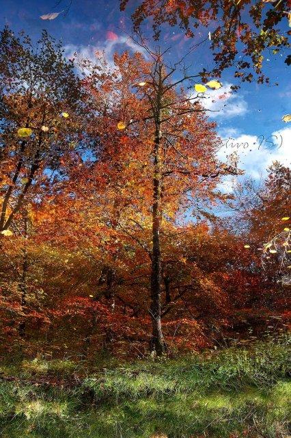 Erase una vez el otoño