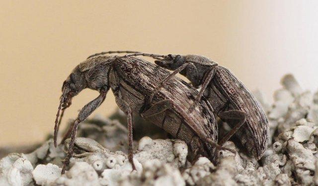 Escarabajos alienigenas NI V Milenio ;-))