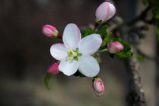 Flora de Baga
