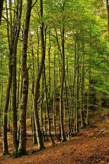 La luz del bosque