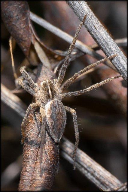 La misma arañita, otra pose.