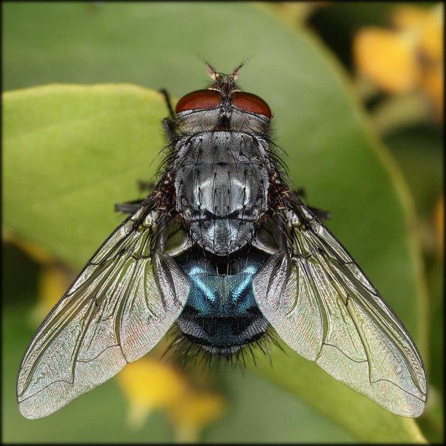 La misma mosca.
