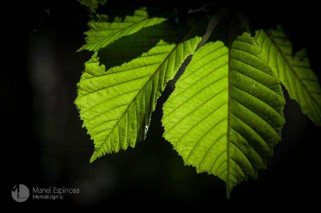 Light on leaves