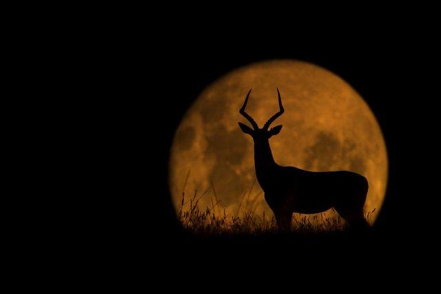 Luna de Kariega