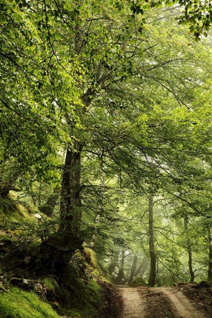 Mis verdes caminos