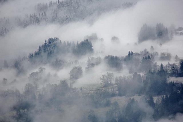 Nieblas apinas