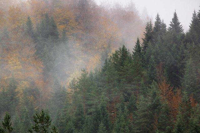 Nieblas en otoño