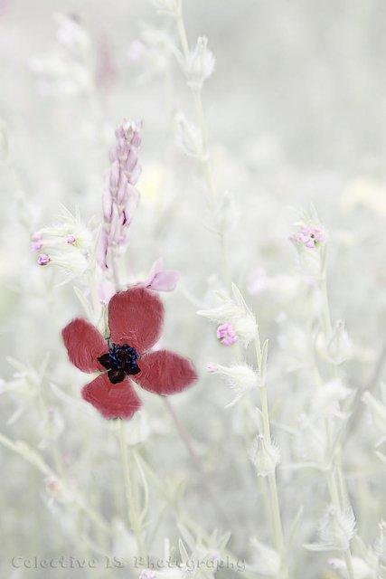 Papaver y otras hierbas