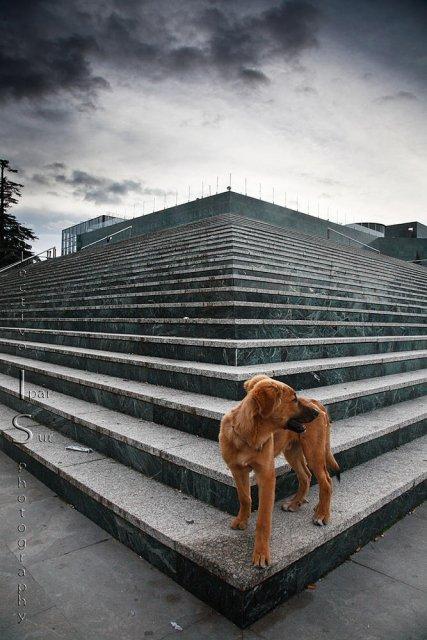 Paseando con perro y cámara