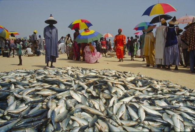 Senegal, reparto de pesca.