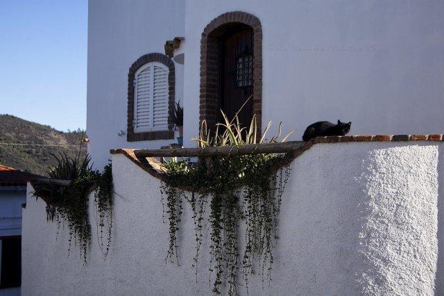 Un lindo gatito II
