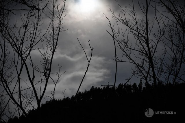 Under grey pale sky