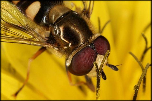 Ya va quedando menos polen.