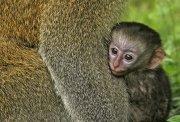 ¡Que mono!