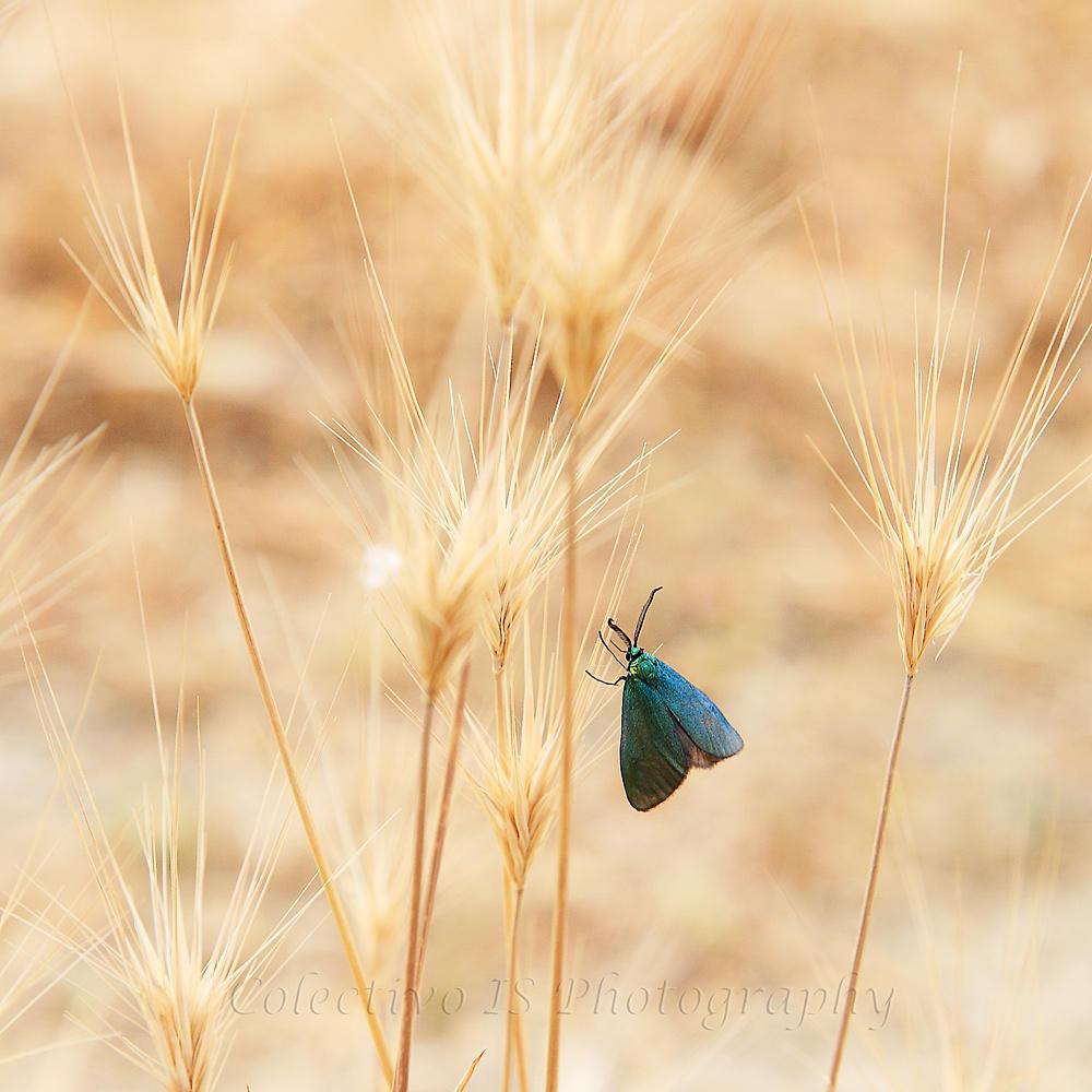 ¿Sobra la mariposa? (Txema Bacaicoa (Colectivo IS))