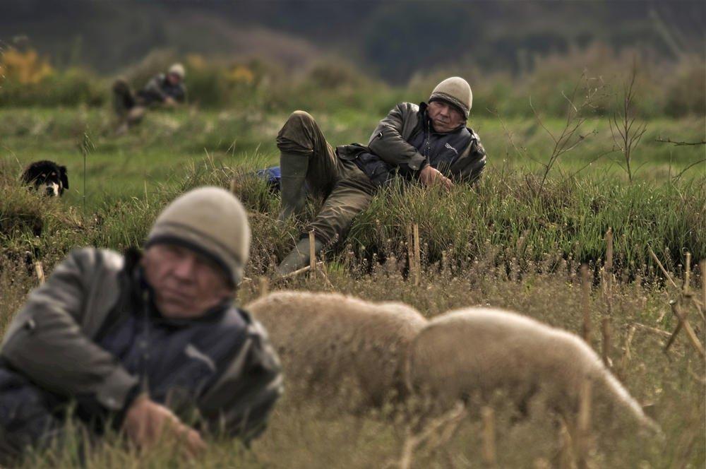 ¿Y si en vez de clonar a las ovejas, clonasen a los pastores? (Salvador Solé Soriano)