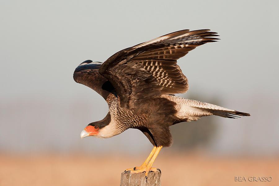 A Volar...