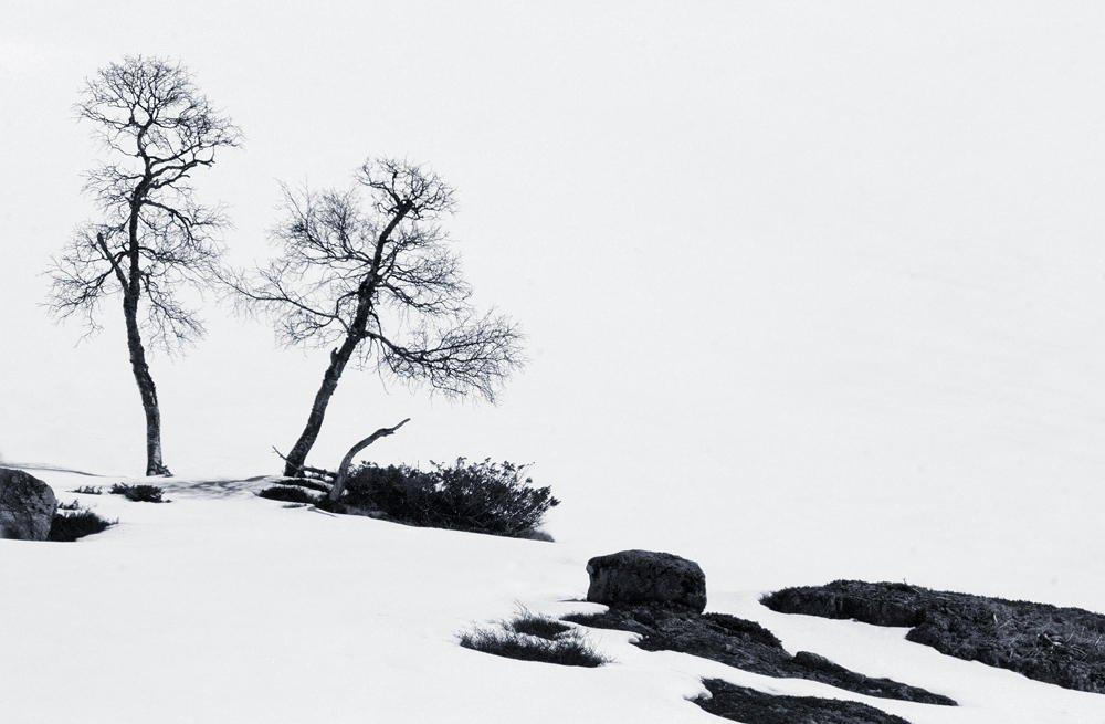 Abedules en la nieve (Salvador Solé Soriano)
