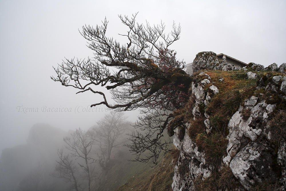 Aferrado a la roca (Txema Bacaicoa (Colectivo IS))