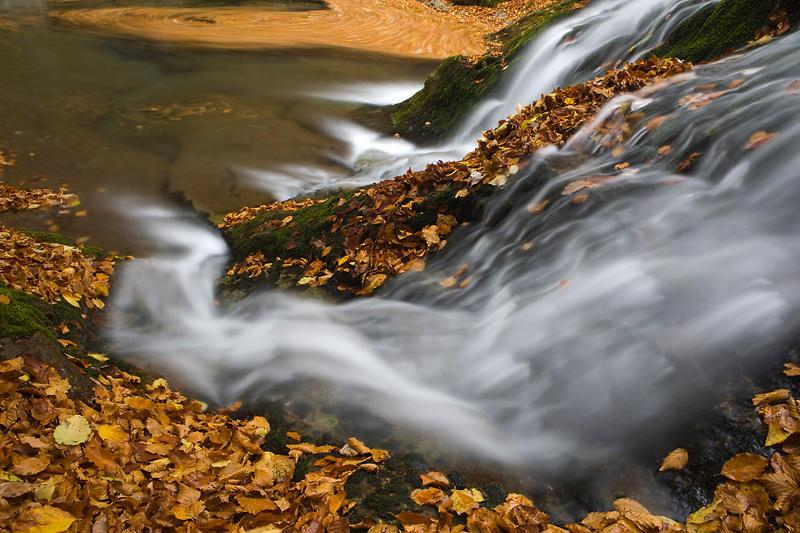 Agua y hojas (david Pérez Hens)