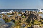algas y picos