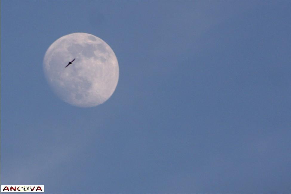 altos vuelos. (Antonio Cuenca.   vaya)