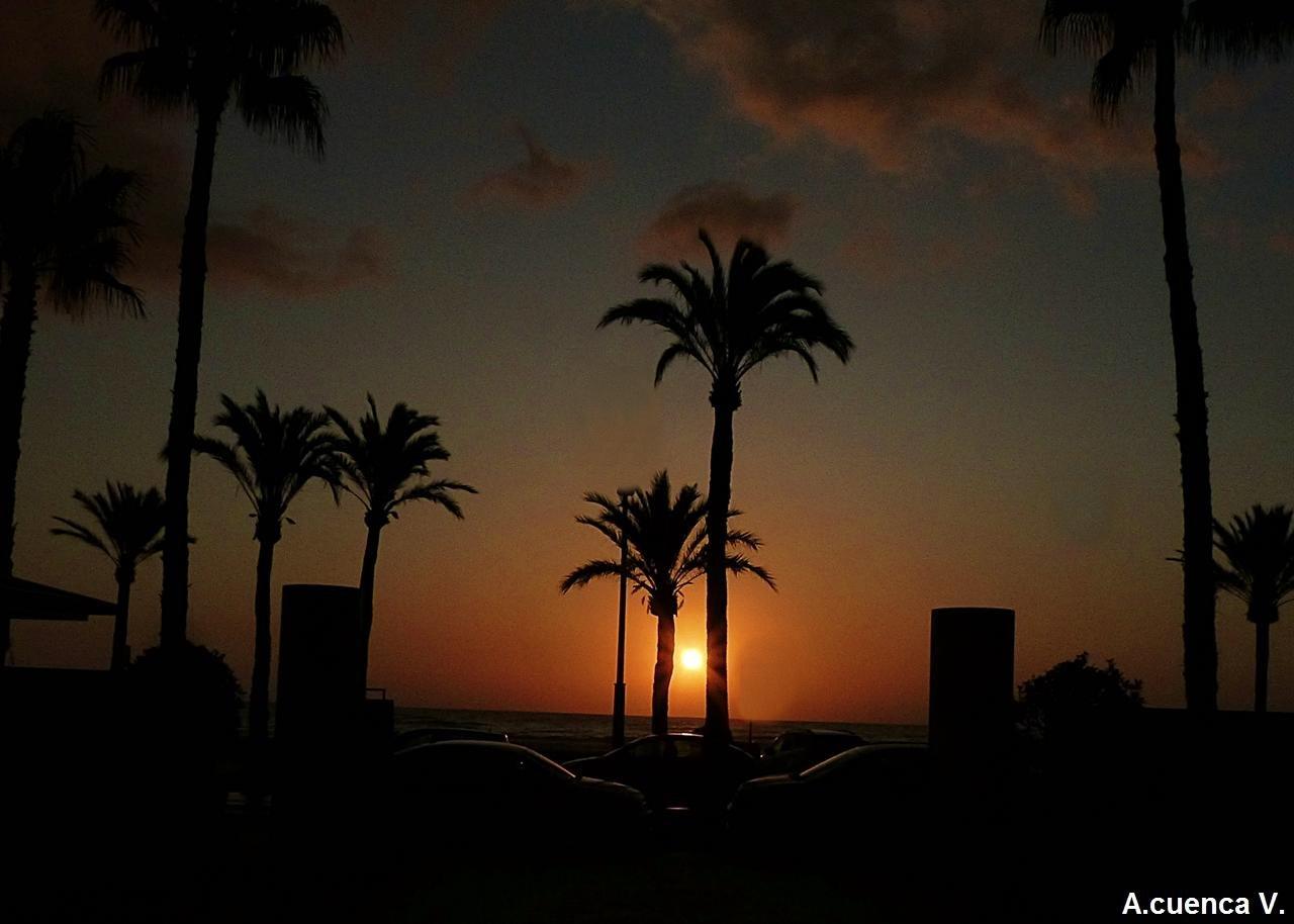 Amanece entre palmeras. (Antonio Cuenca.   vaya)