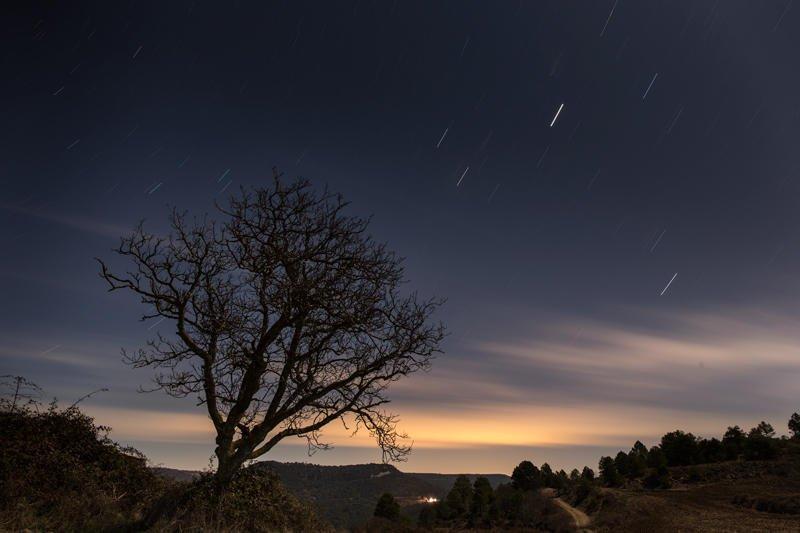 árbol desafiante (Jose Luis Rubio Perez)