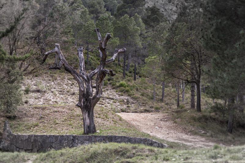 árbol escultural (Jose Luis Rubio Perez)