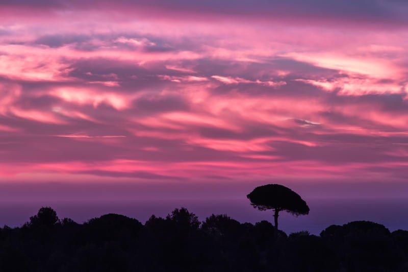arbol sobre cielo encendido (Jose Luis Rubio Perez)