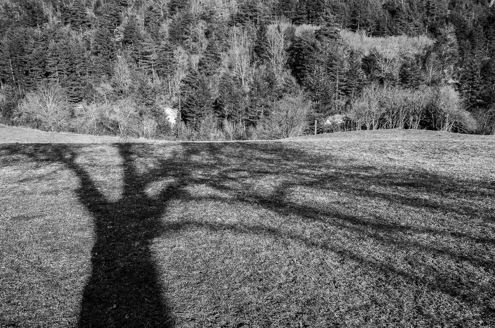 Árboles (Abrahan Manuel Francisco)