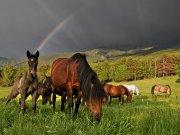 Arcoíris con caballos
