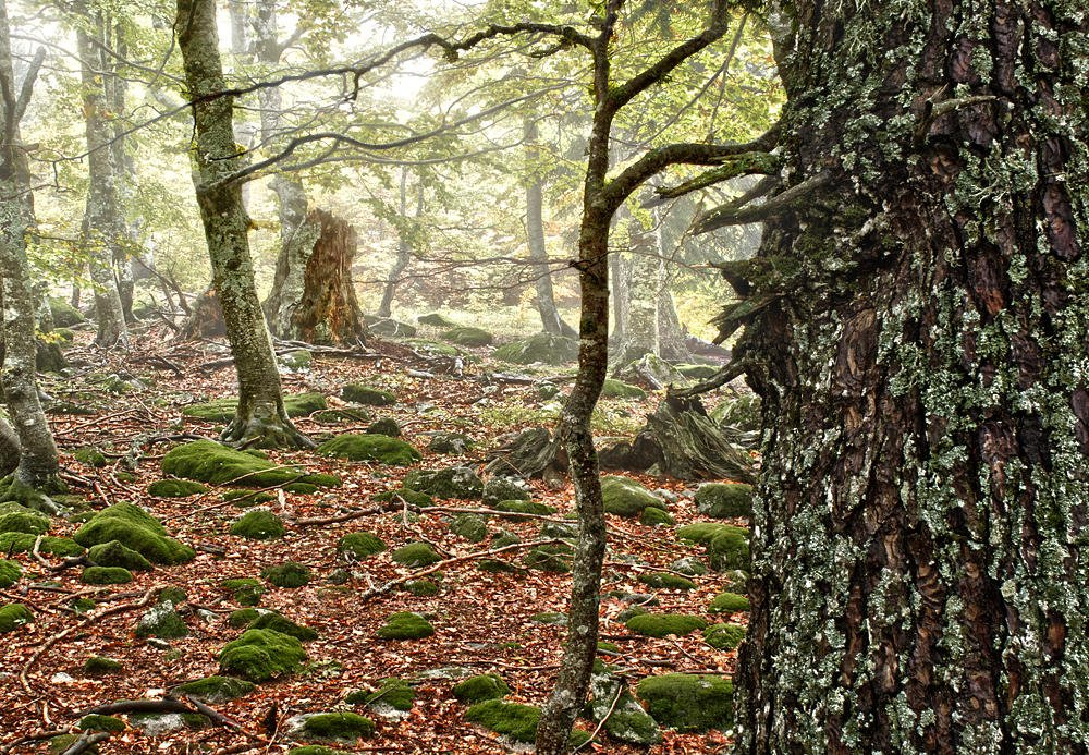 Arquetipo forestal (Salvador Solé Soriano)
