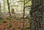 Arquetipo forestal
