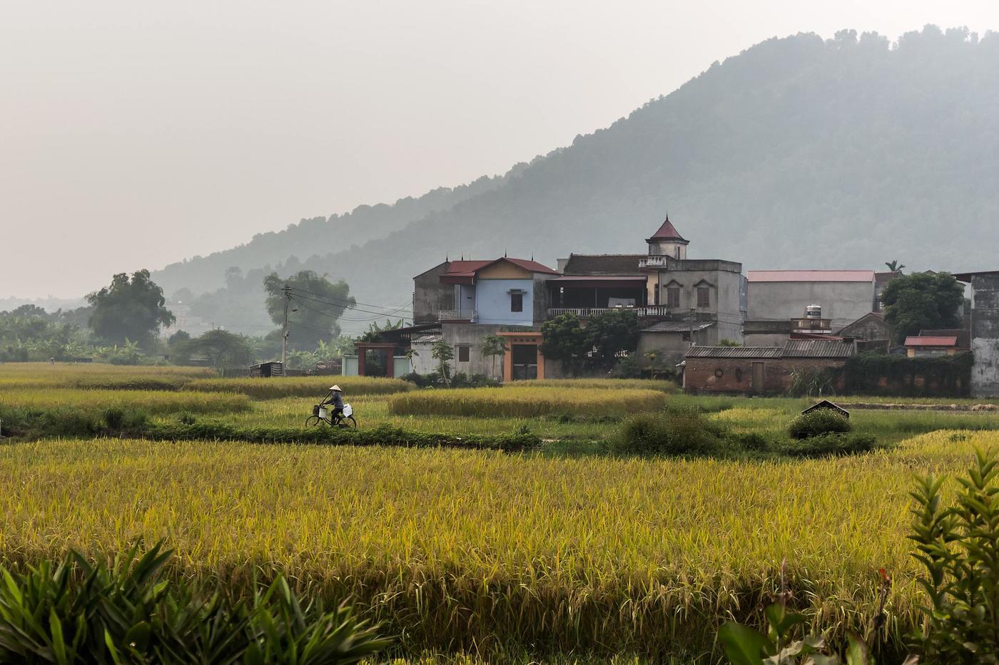 arroz vietnamita (Jose Luis Rubio Perez)
