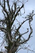 Aves en Iberá