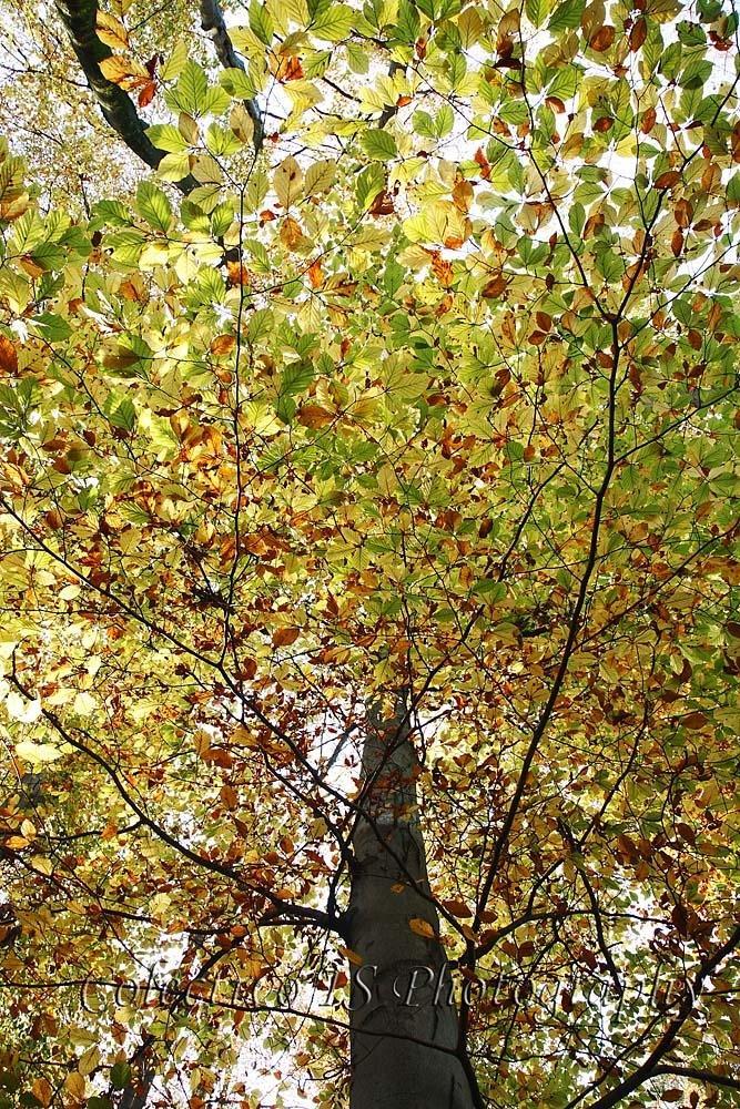 Bajo un dosel multicolor (Txema Bacaicoa (Colectivo IS))