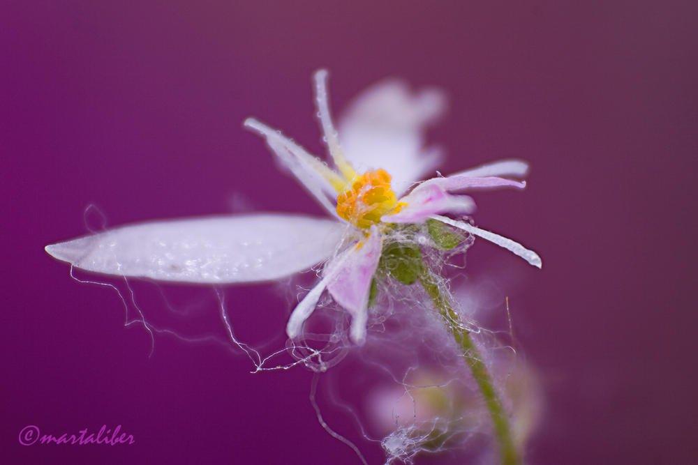 Belleza oculta (marta Liber)